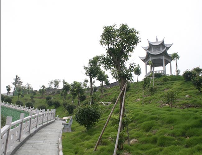 龙凤墓园风景秀丽,鸟语花香,环境优雅,是为寄哀思,举孝悌,风媒花,福萌